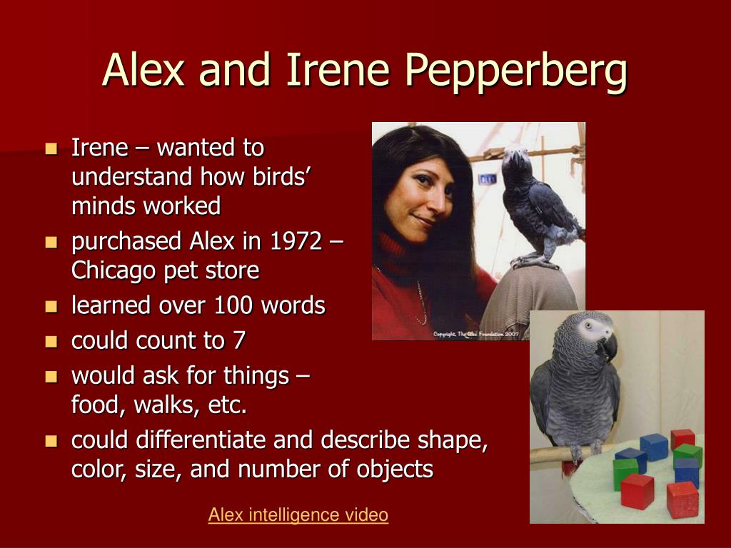 Irene – wanted to understand how birds' minds worked