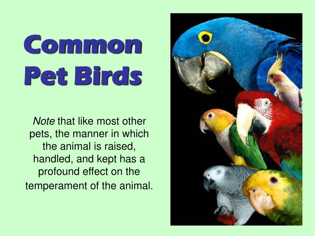 Common Pet Birds