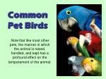 common pet birds