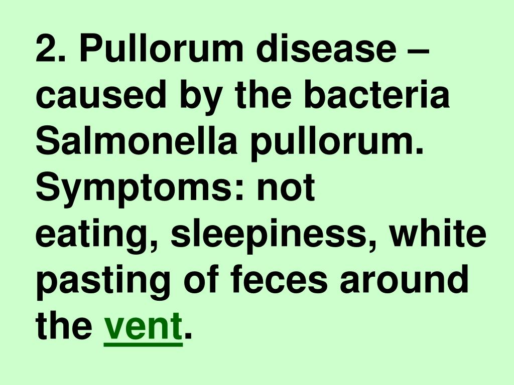 2. Pullorum disease – caused by the bacteria Salmonella pullorum. Symptoms: not