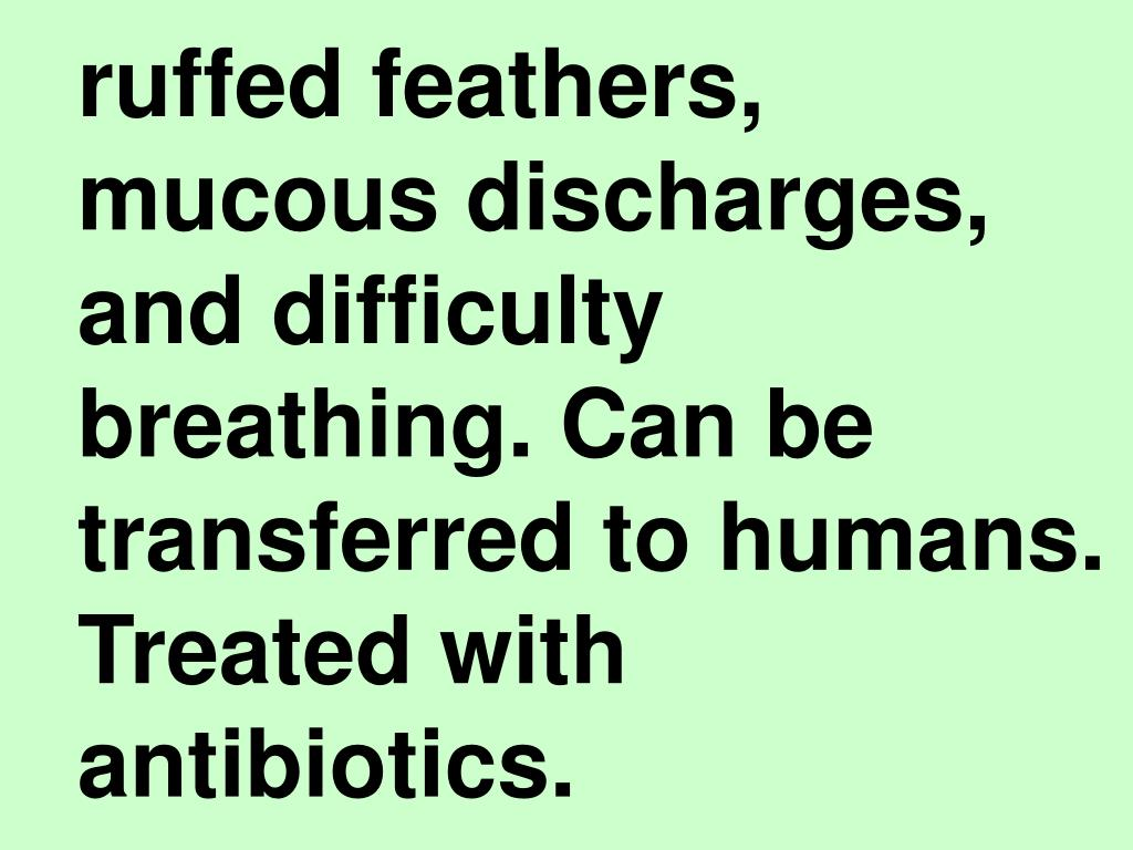 ruffed feathers, mucous discharges, and difficulty breathing. Can be transferred to humans. Treated with antibiotics.