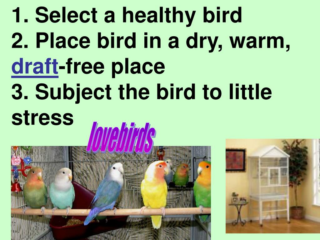 1. Select a healthy bird
