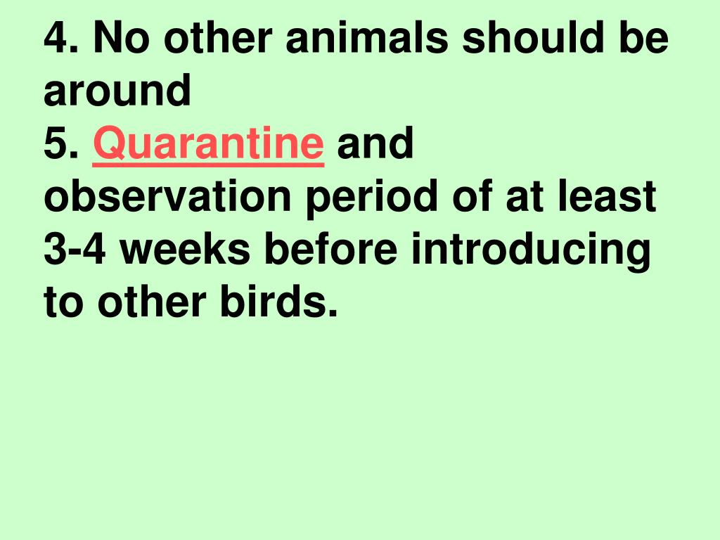 4. No other animals should be around