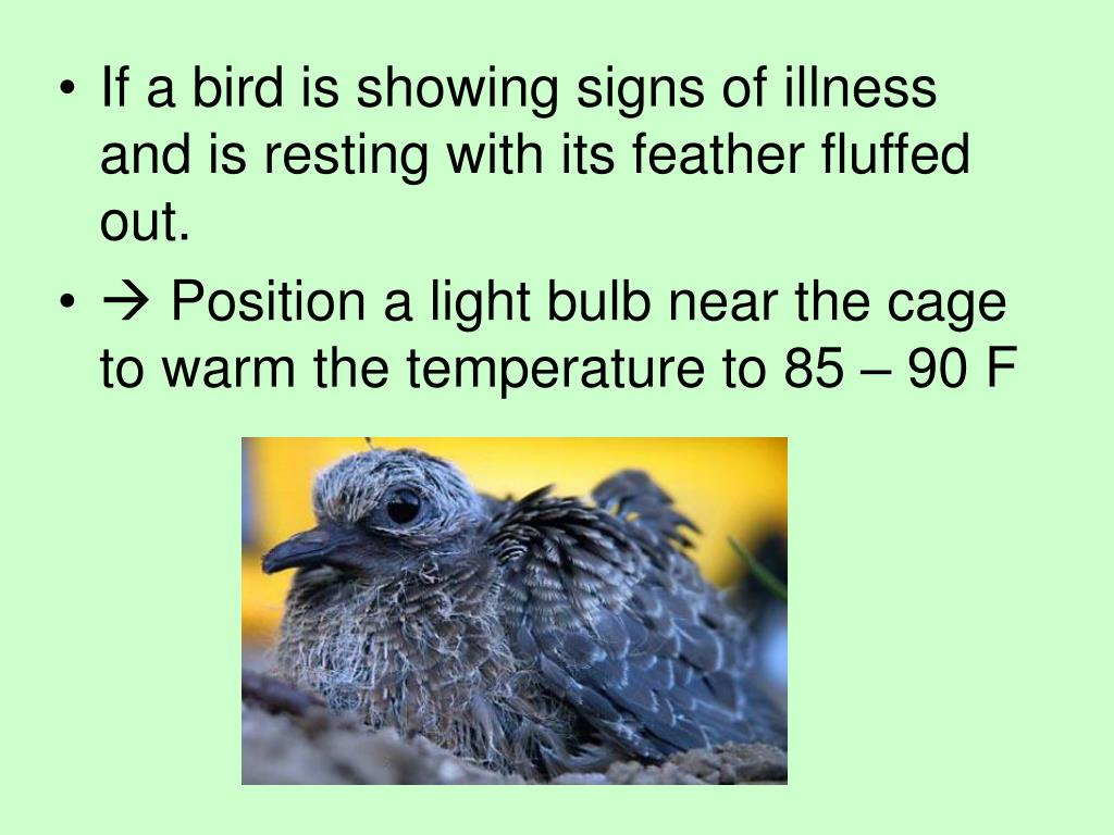 If a bird is showing signs of illness and is resting with its feather fluffed out.