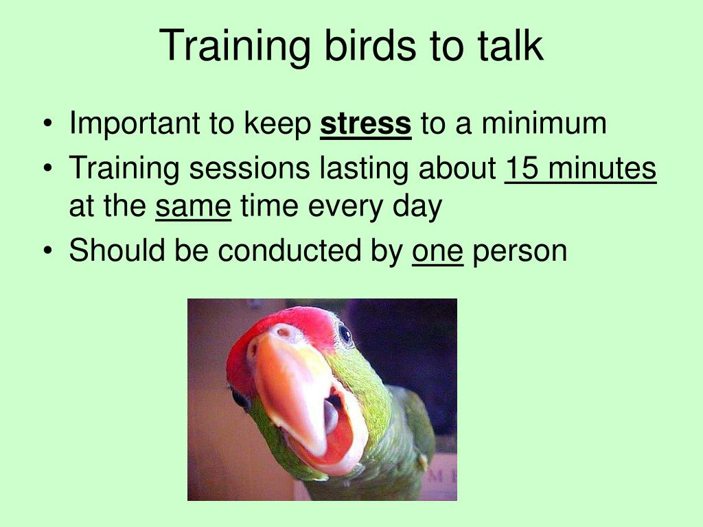 Training birds to talk