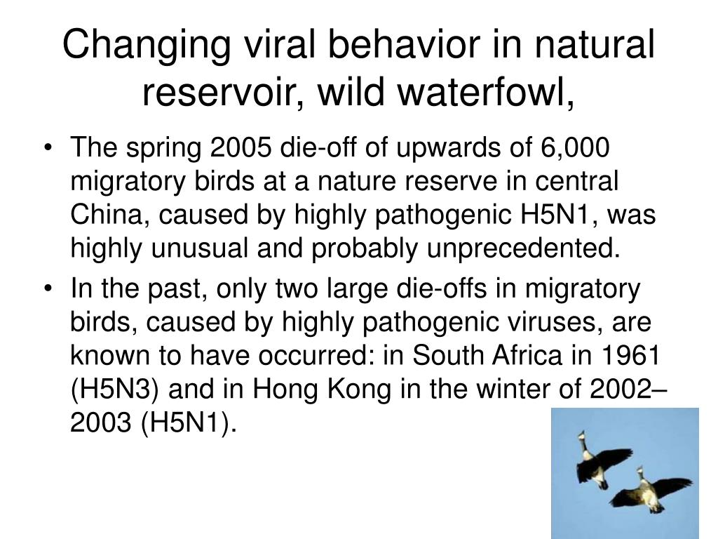 Changing viral behavior in natural reservoir, wild waterfowl,