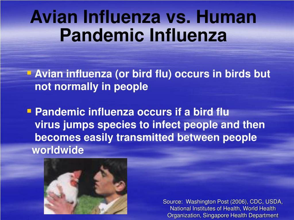 Avian Influenza vs. Human Pandemic Influenza