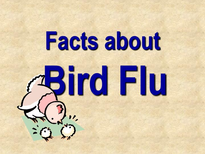 Facts about bird flu