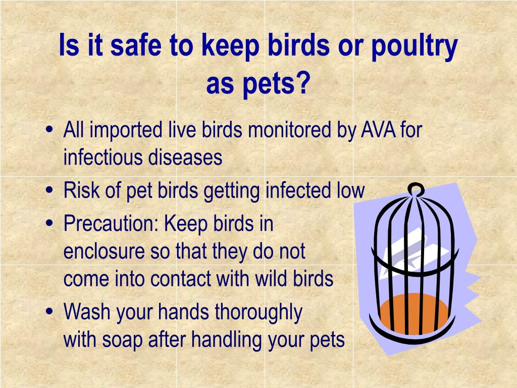 Is it safe to keep birds or poultry as pets?