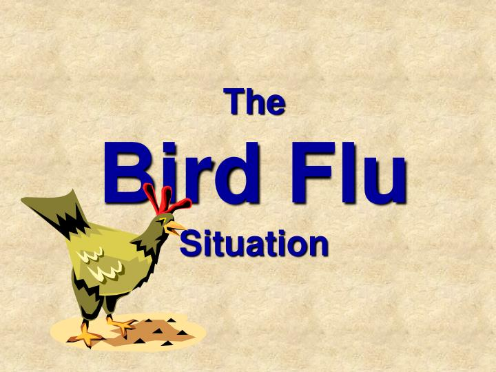 The bird flu situation