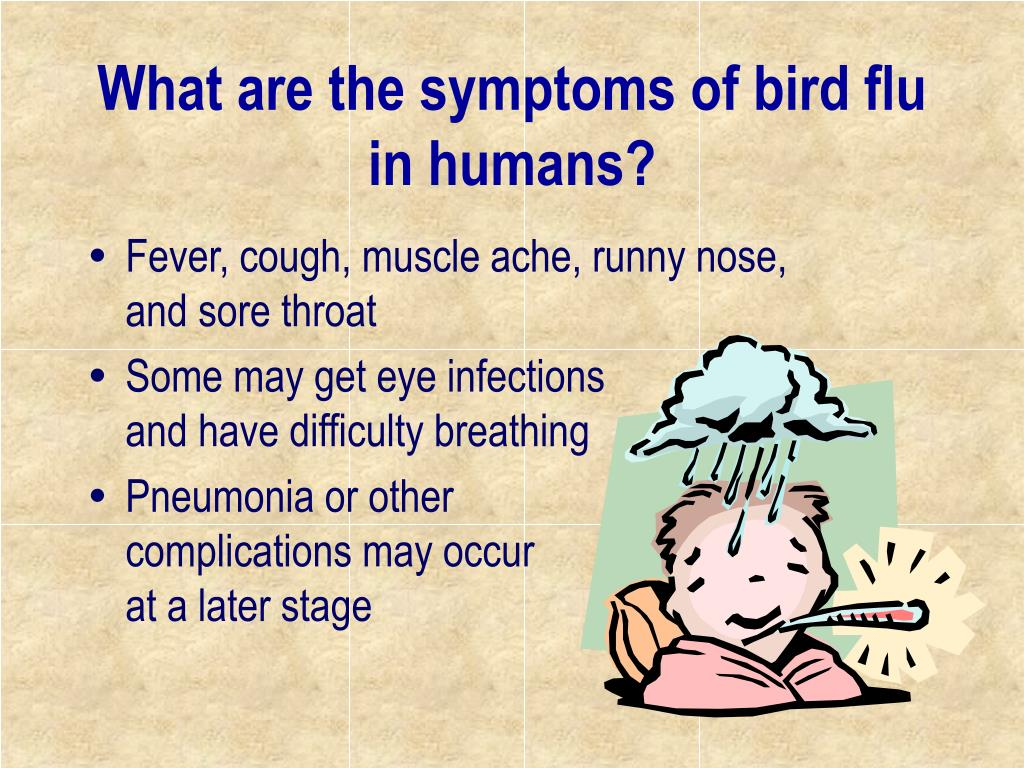 What are the symptoms of bird flu in humans?