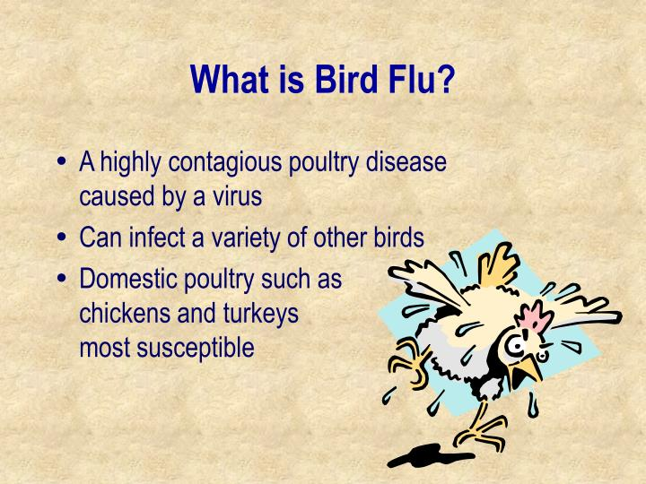 What is bird flu