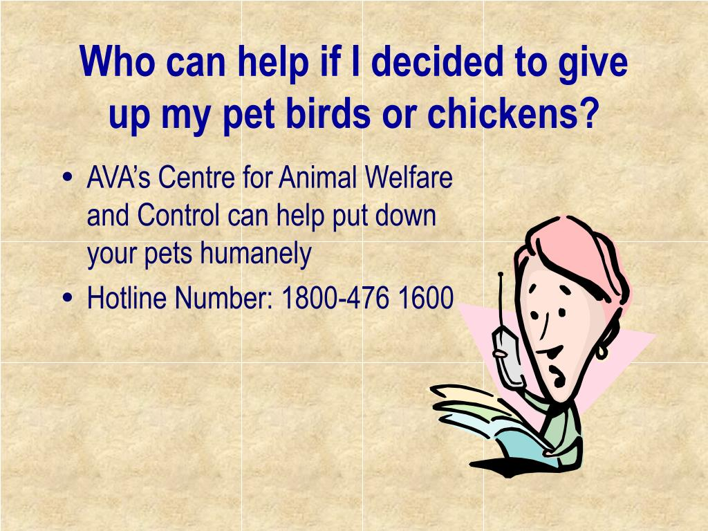 Who can help if I decided to give up my pet birds or chickens?