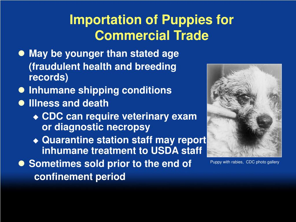 Importation of Puppies for