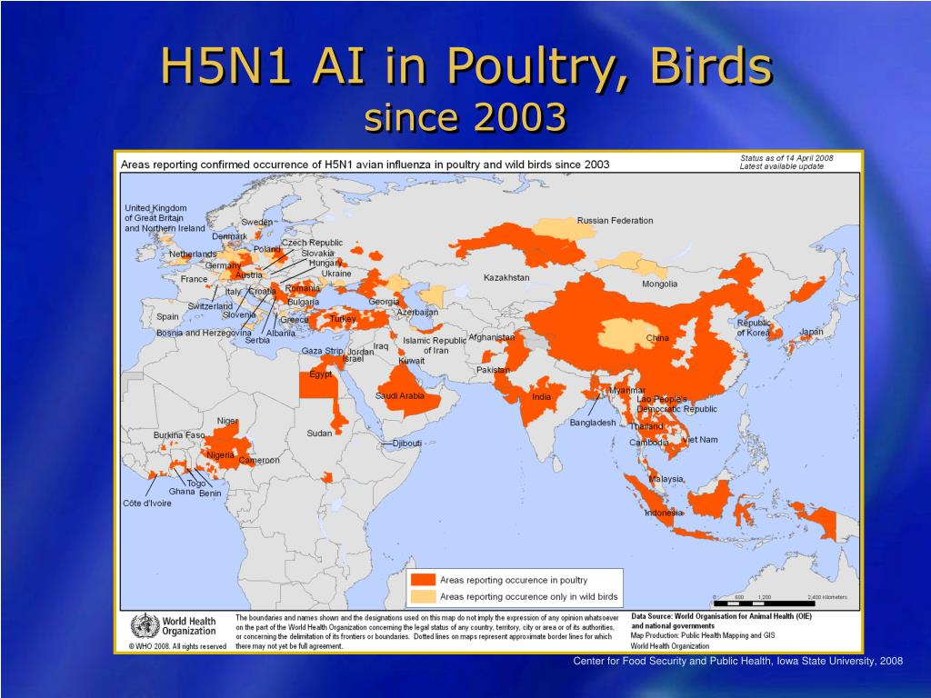 H5N1 AI in Poultry, Birds
