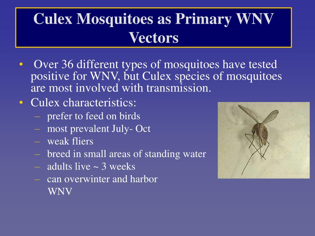 Culex Mosquitoes as Primary WNV Vectors