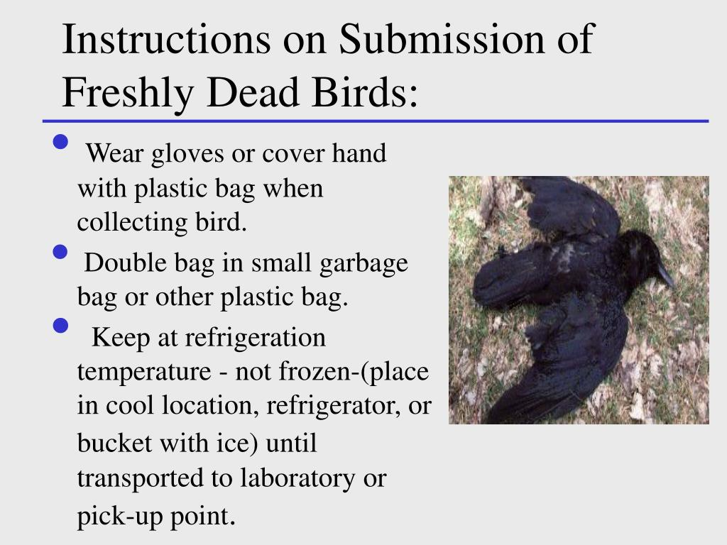 Instructions on Submission of Freshly Dead Birds: