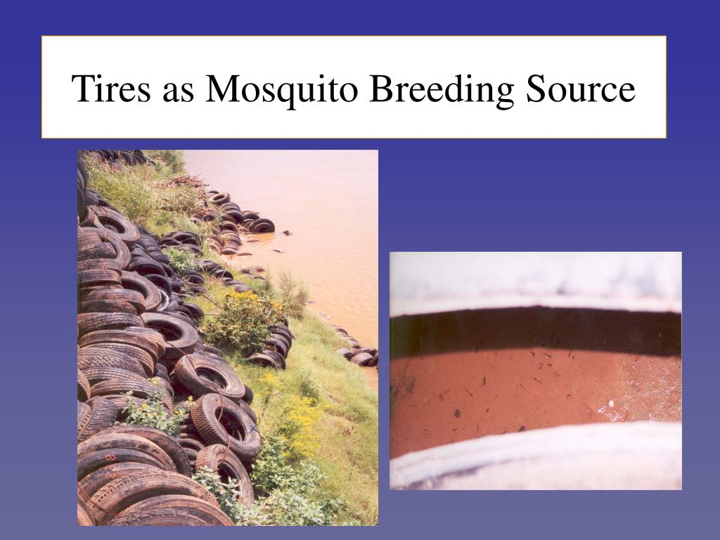 Tires as Mosquito Breeding Source