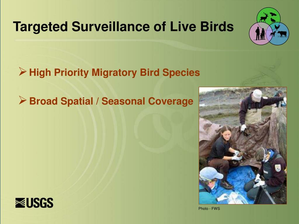 Targeted Surveillance of Live Birds