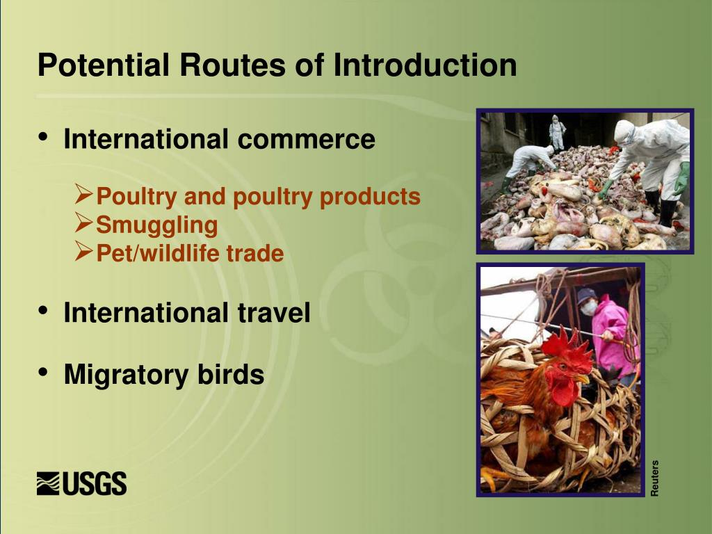 Potential Routes of Introduction