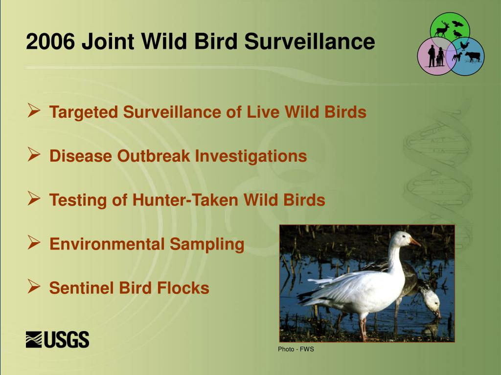 Targeted Surveillance of Live Wild Birds