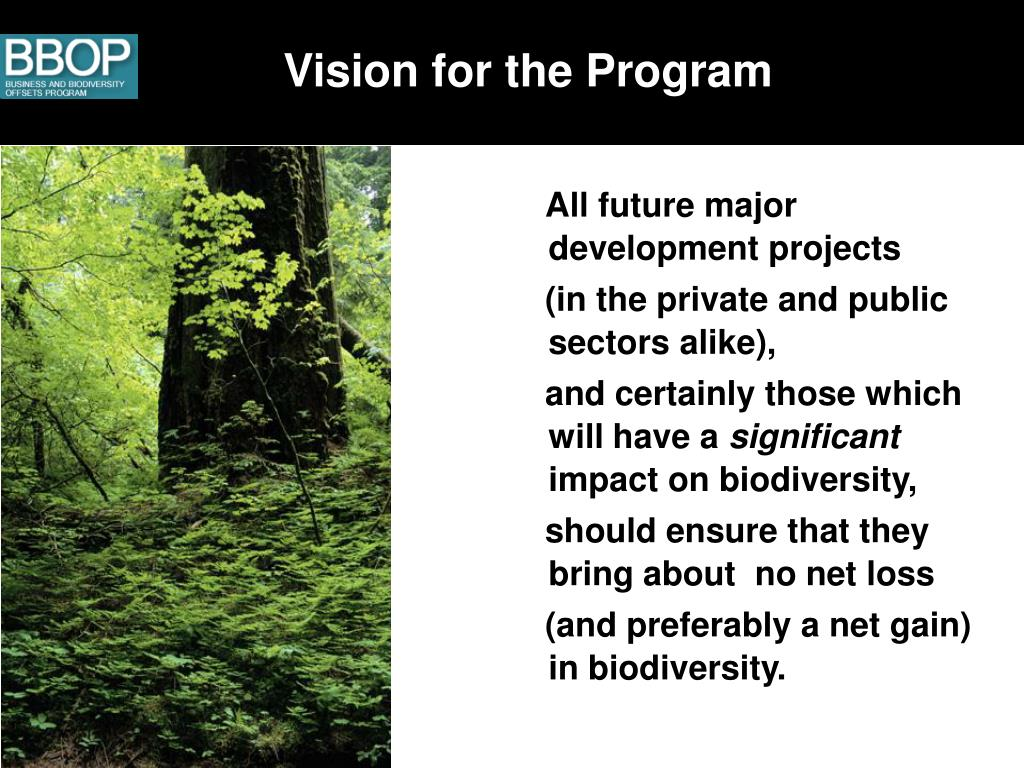 Vision for the Program