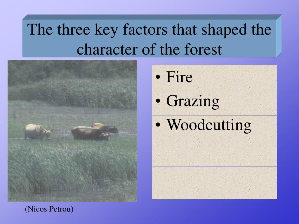 The three key factors that shaped the character of the forest