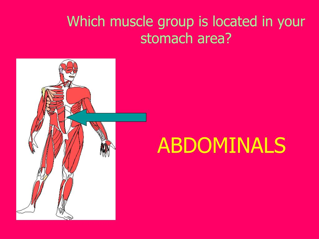 Which muscle group is located in your