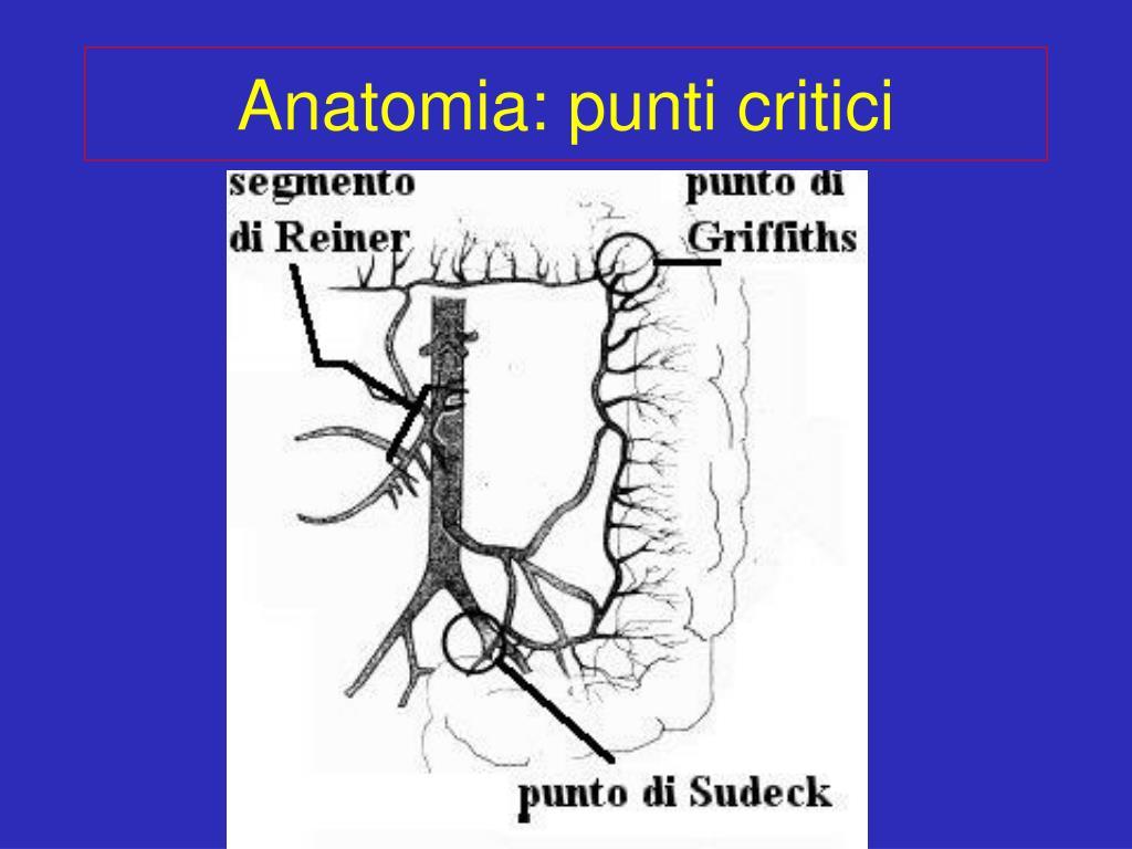 Anatomia: punti critici