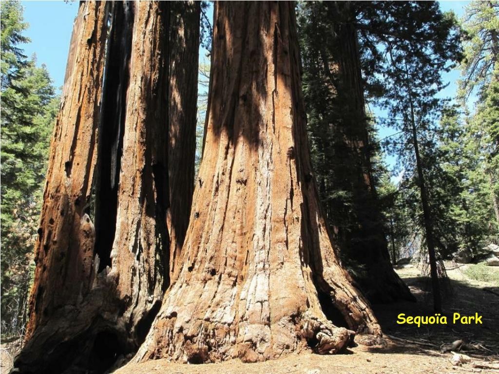 Sequoïa Park