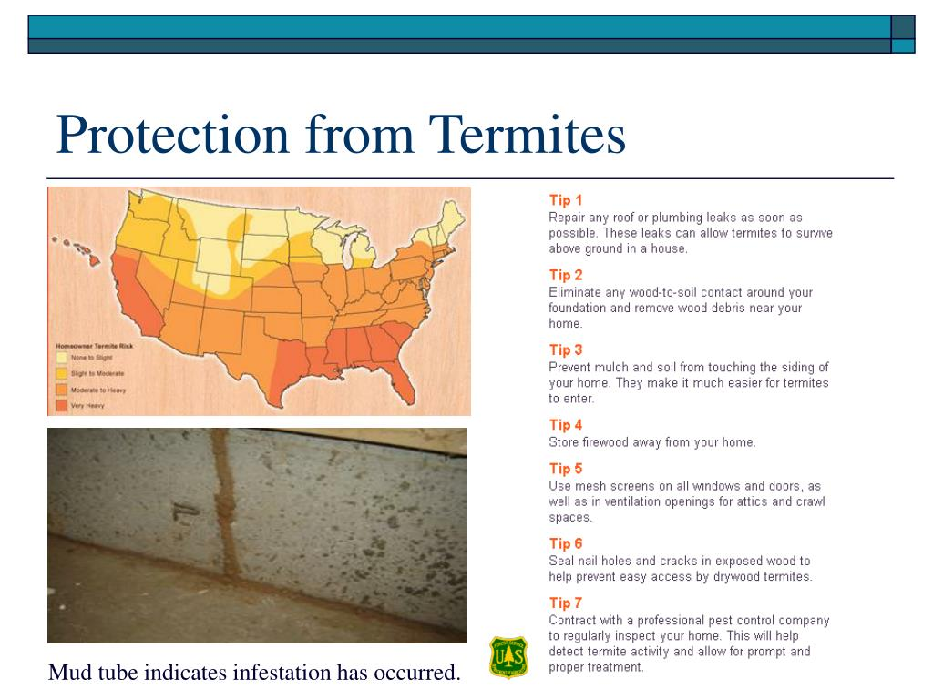 Protection from Termites