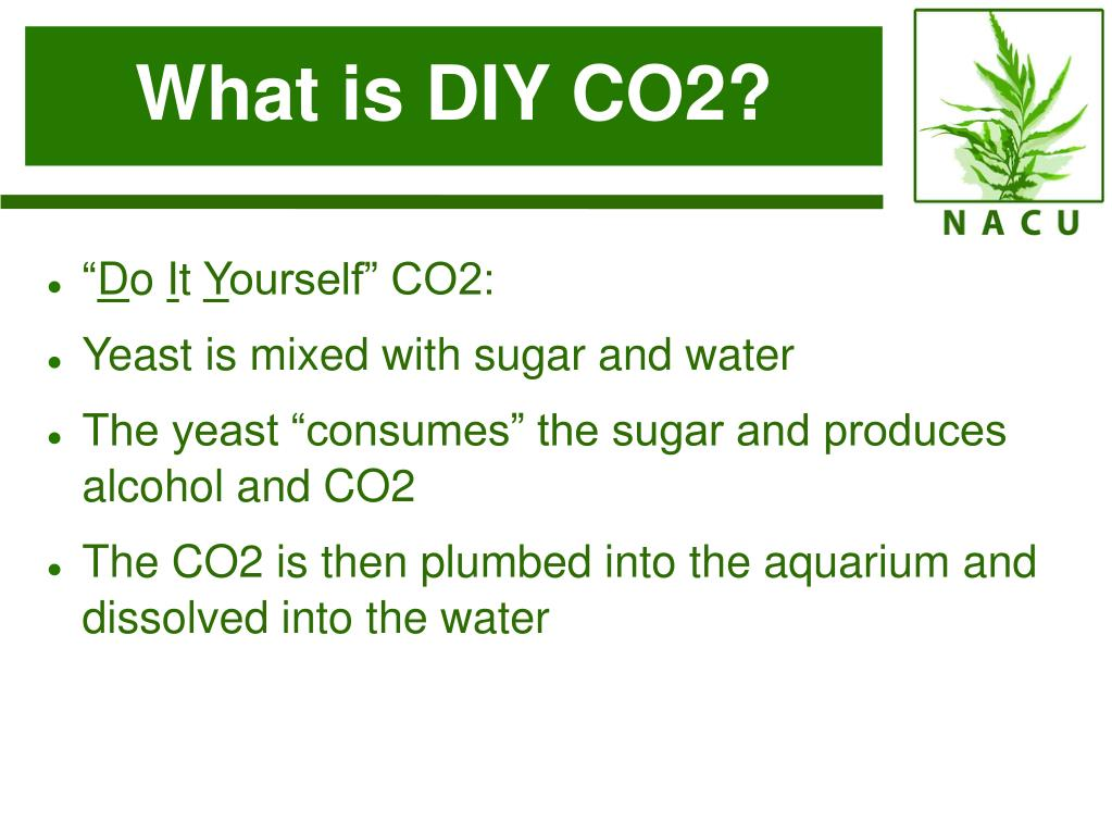 What is DIY CO2?