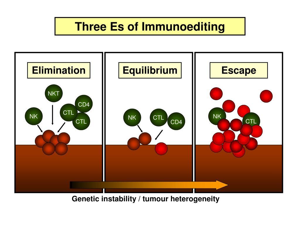 Three Es of Immunoediting