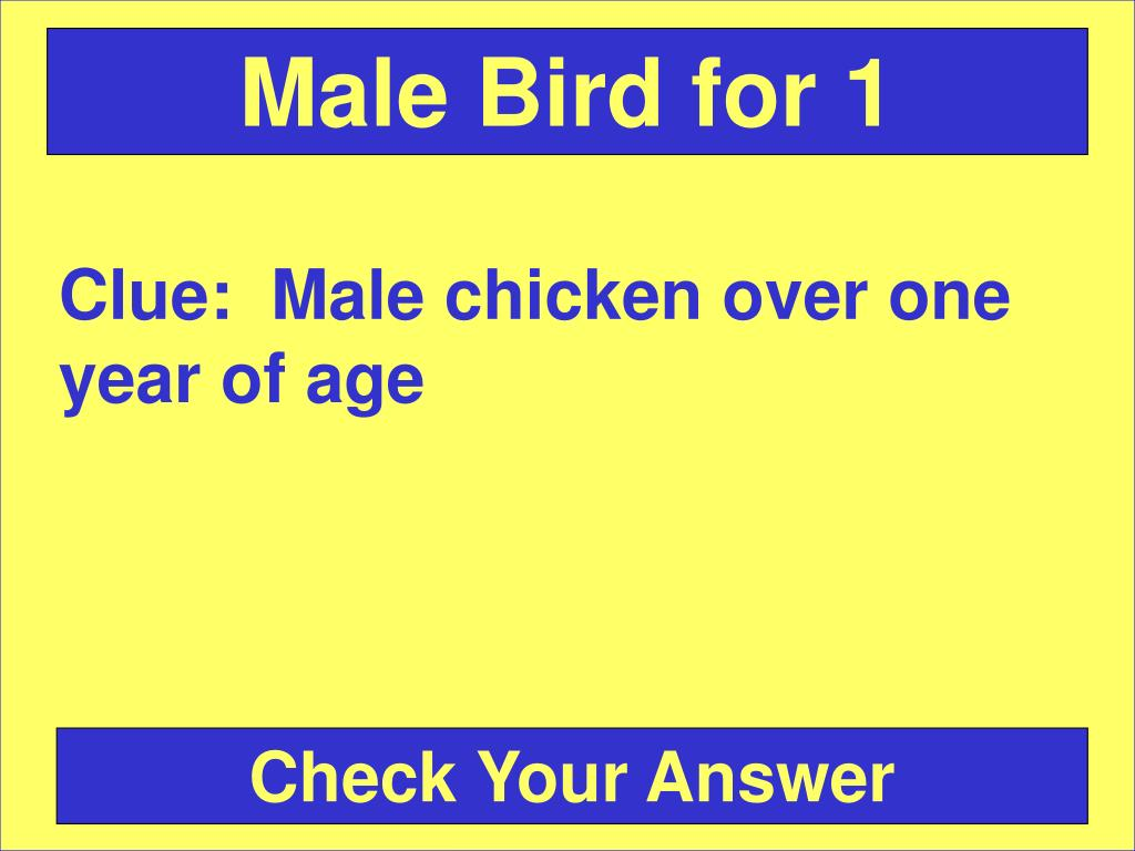 Male Bird for 1