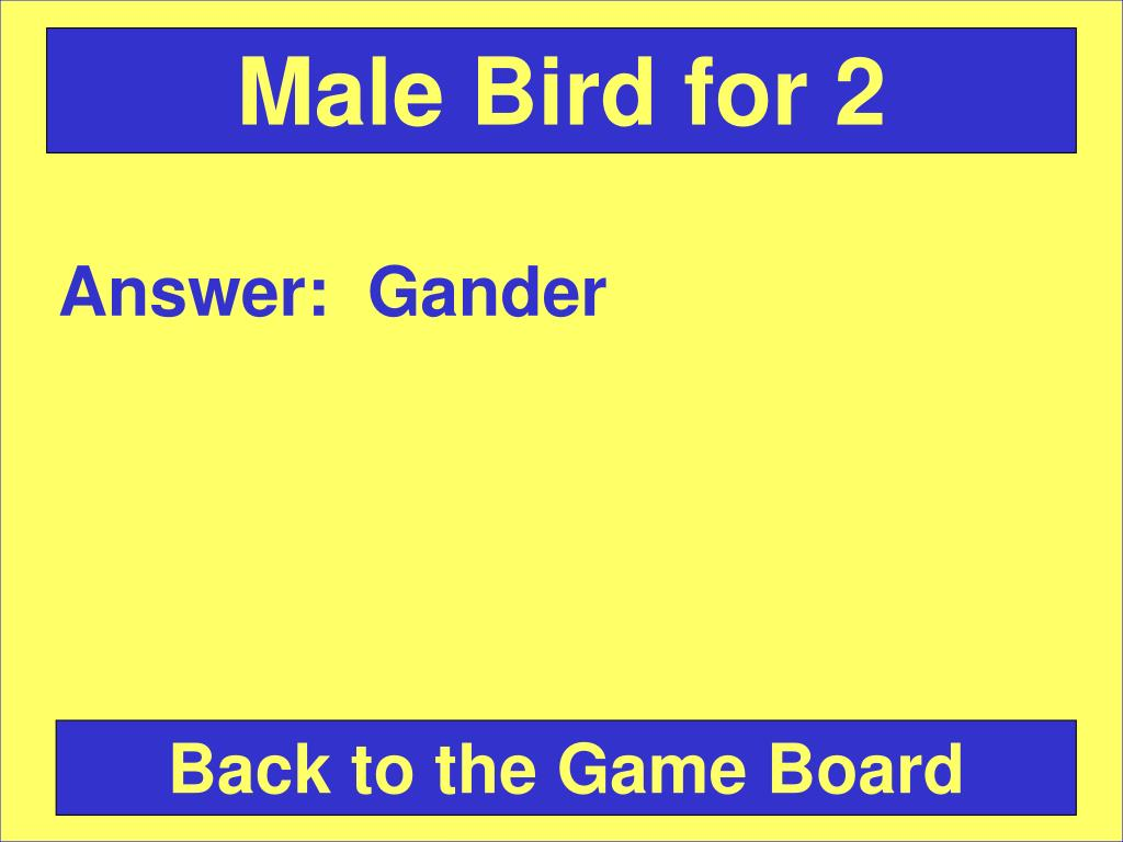 Male Bird for 2