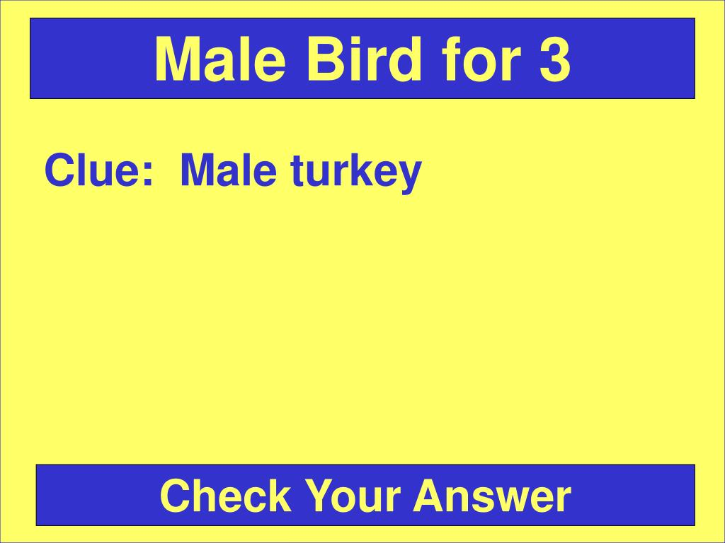 Male Bird for 3
