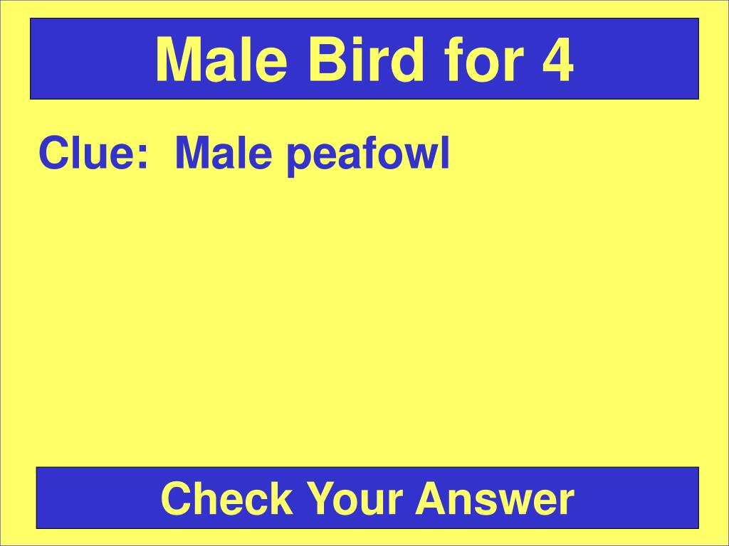 Male Bird for 4