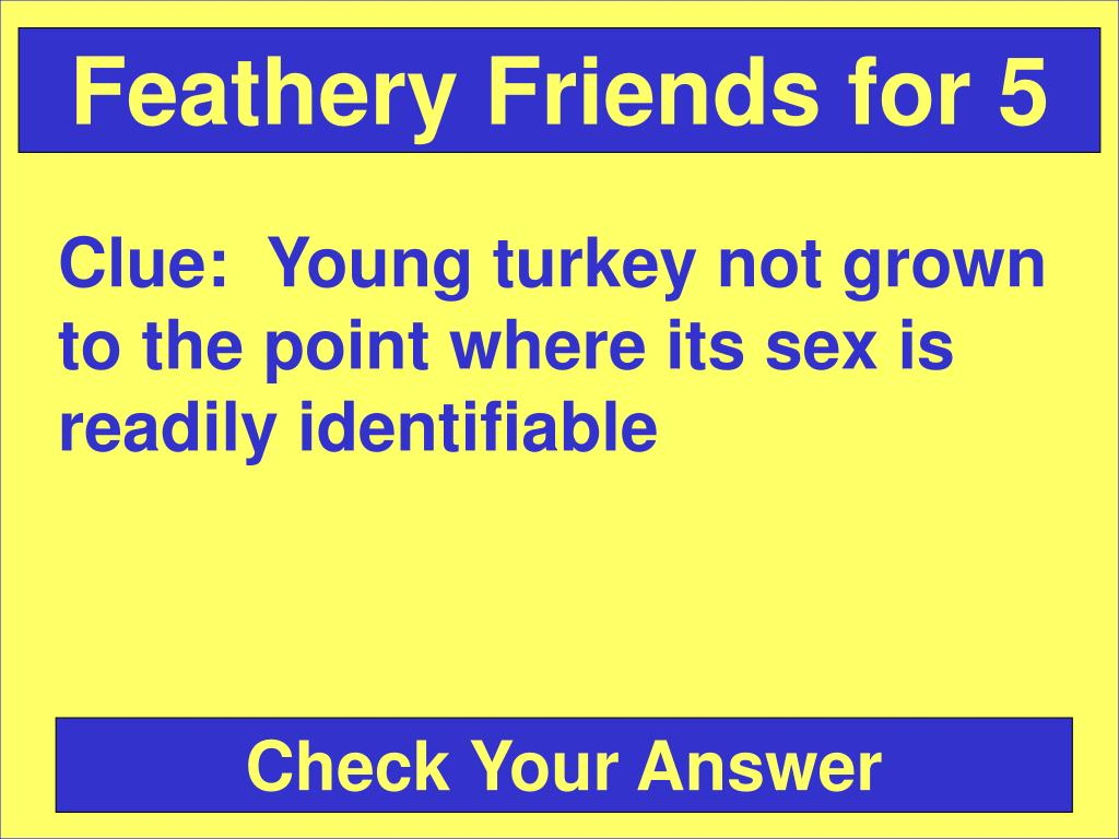 Feathery Friends for 5
