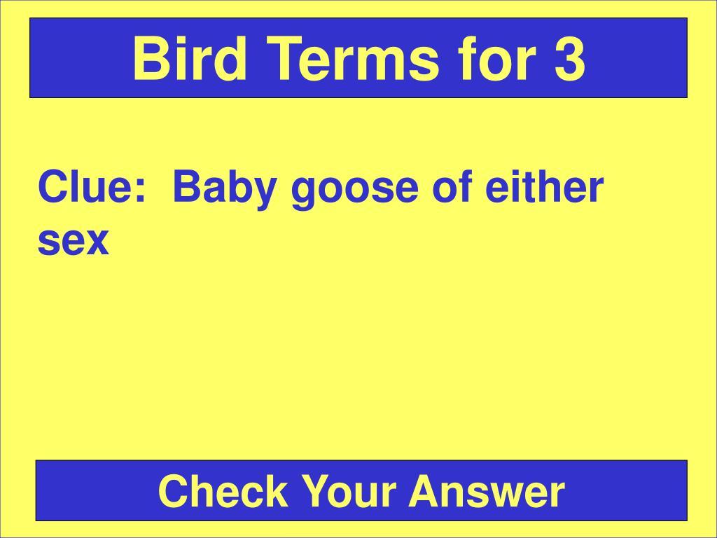 Bird Terms for 3