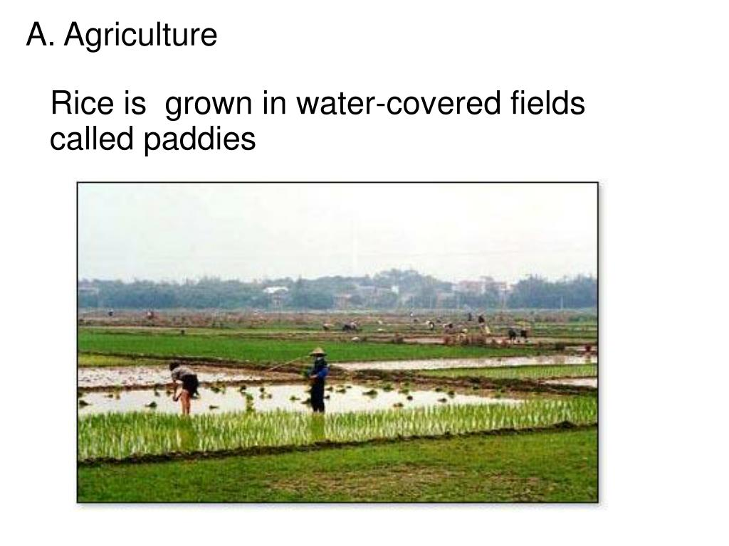 A. Agriculture