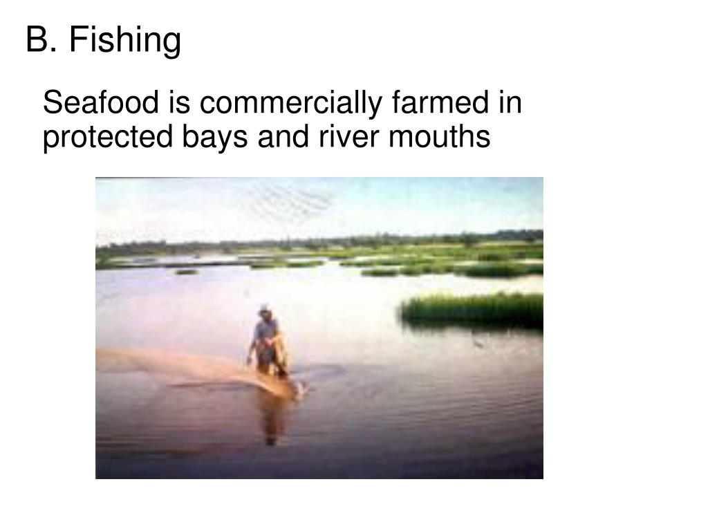 Seafood is commercially farmed in protected bays and river mouths