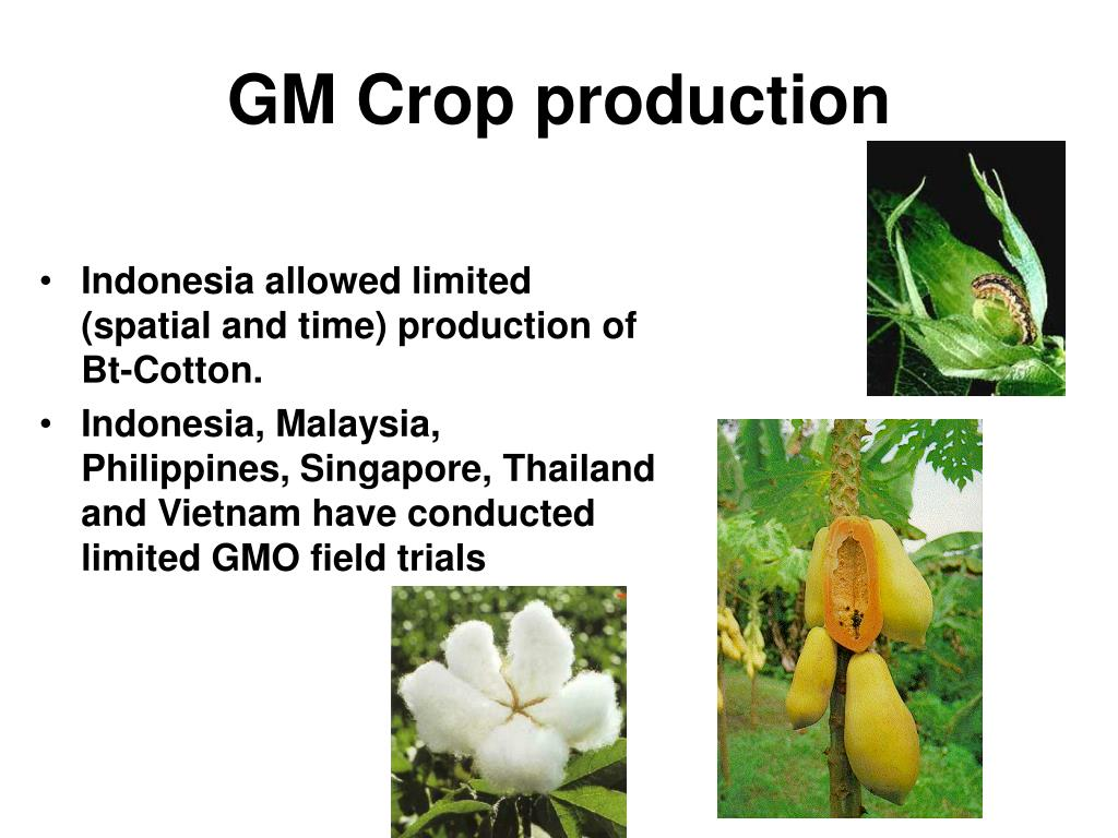 GM Crop production