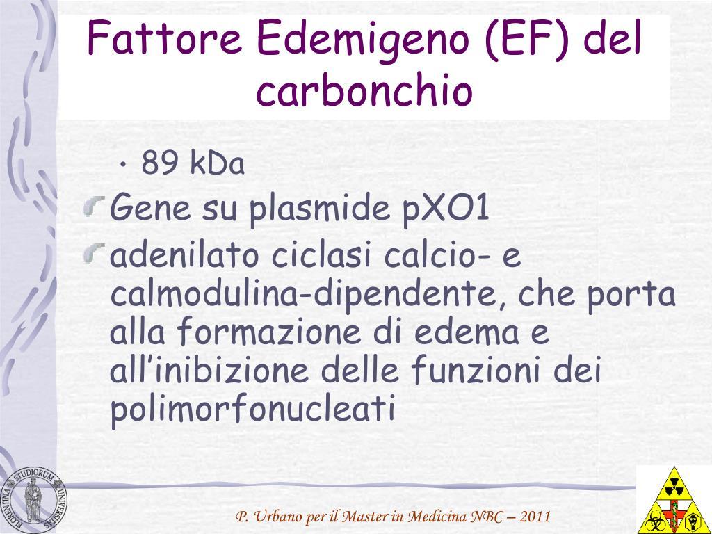 Fattore Edemigeno (EF) del carbonchio