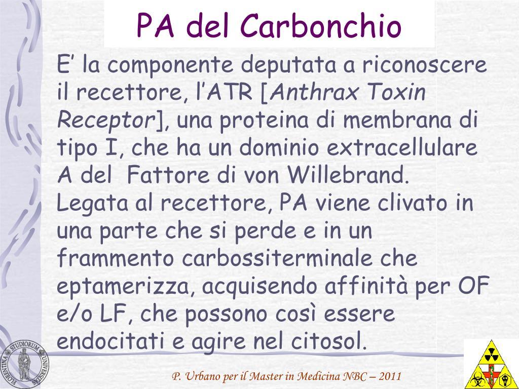 PA del Carbonchio