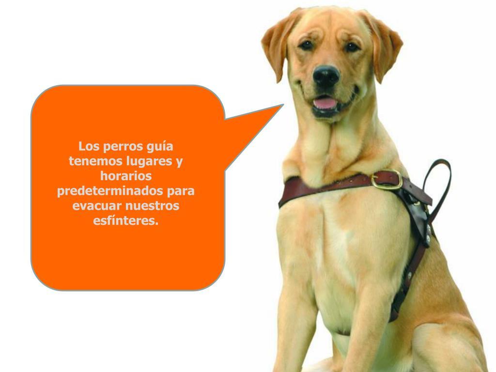 Los perros guía
