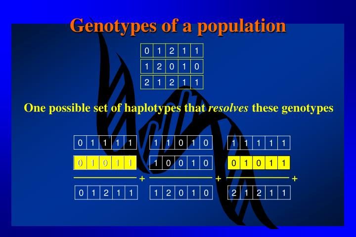 Genotypes of a population