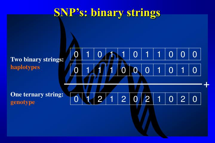 SNP's: binary strings