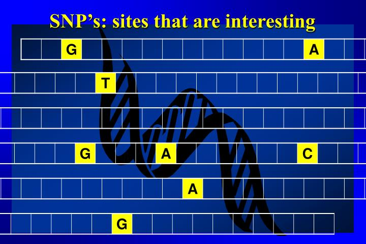 SNP's: sites that are interesting