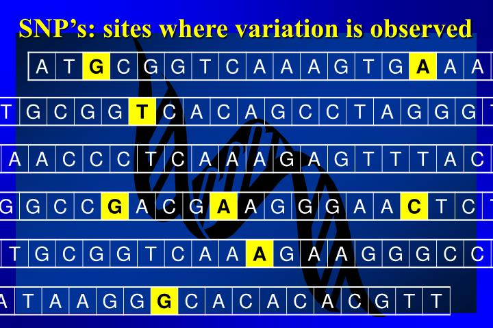 Snp s sites where variation is observed