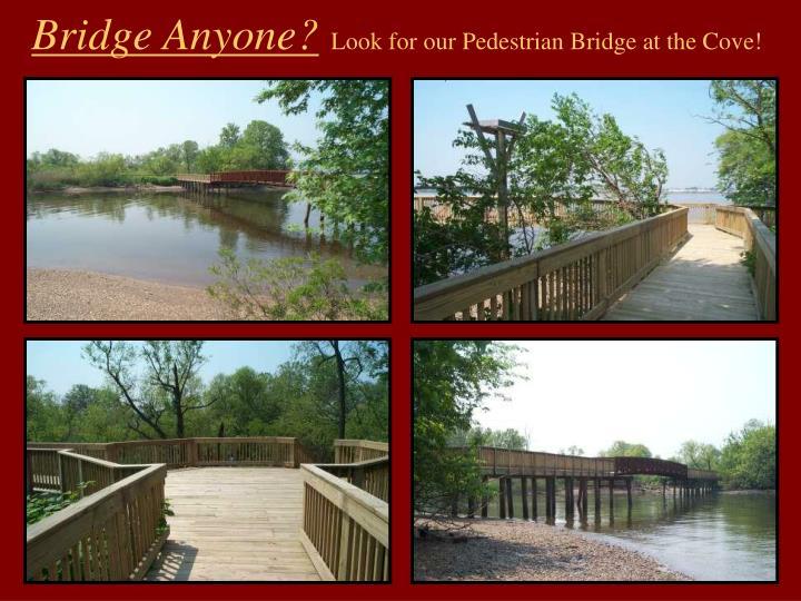 Bridge Anyone?